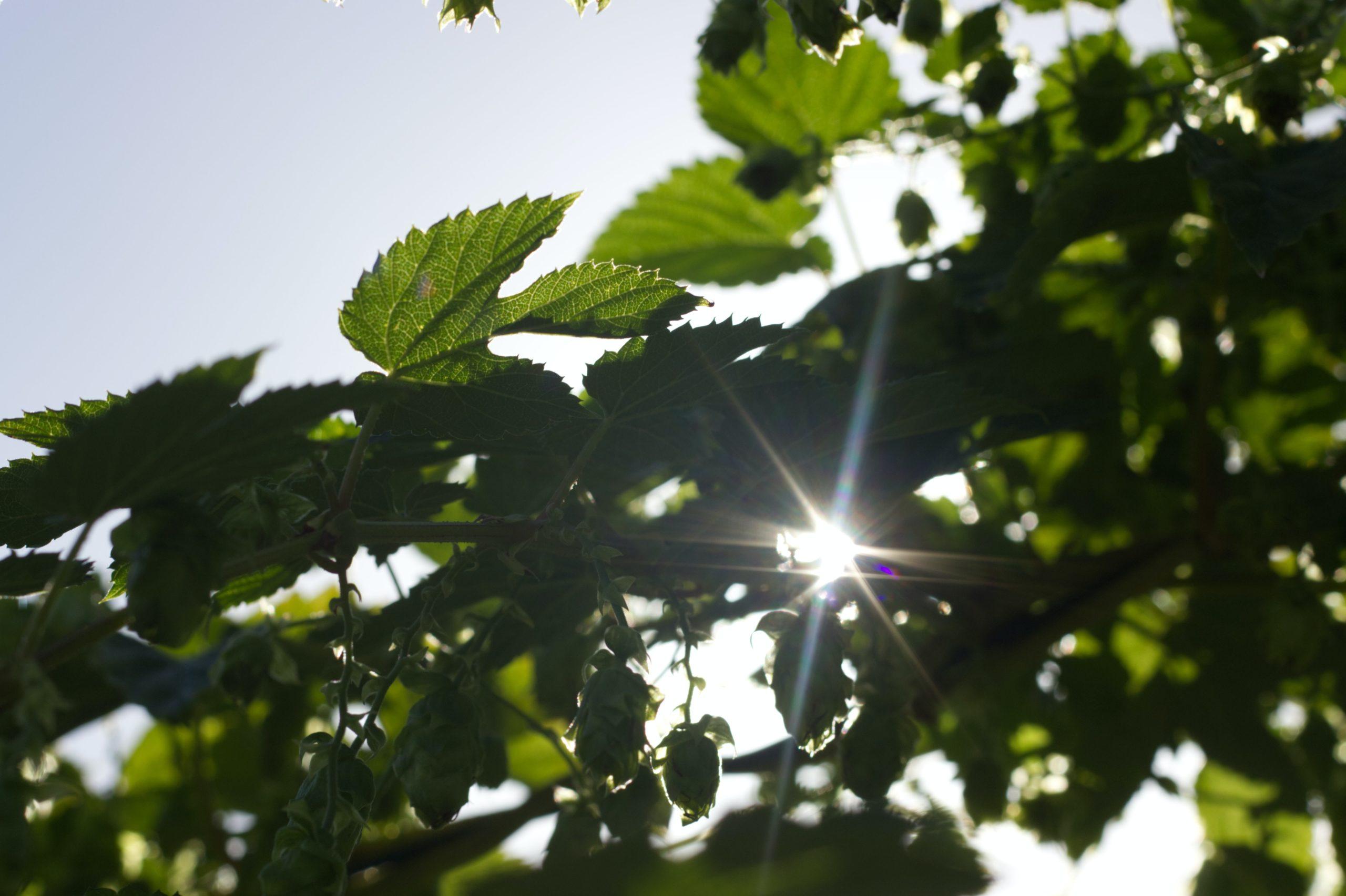 Manifiesto ecologista, significado de sostenibilidad